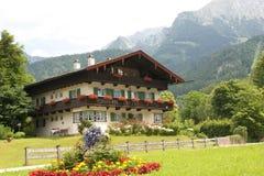 Vita alpina Fotografie Stock