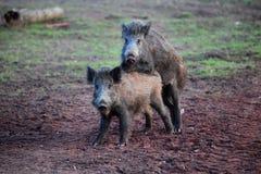 Vita animale Immagini Stock Libere da Diritti