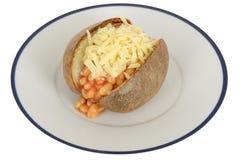 Vita bönor i tomatsås och ostomslagspotatis Arkivfoton