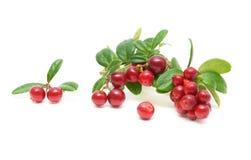 vita bakgrundscranberries Arkivbilder