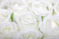 vita bakgrundsro royaltyfri fotografi
