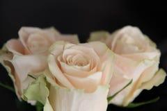 vita bakgrundsro Natur blommor, bukett Arkivfoton