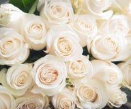 vita bakgrundsro Natur blommor, bukett Royaltyfri Bild