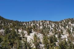 Vita berg Kalifornien Arkivbilder
