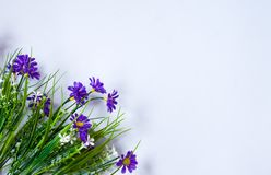 vita bl?a blommor f?r bakgrund arkivfoto
