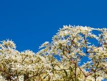 Vita blad med en blå himmel arkivfoto