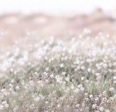 Vita blomma blommor Arkivfoto