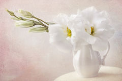 Vita blommor royaltyfria foton