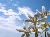Vita blommor Fotografering för Bildbyråer