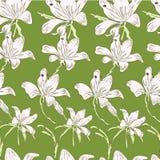 Vita blommor Arkivbild