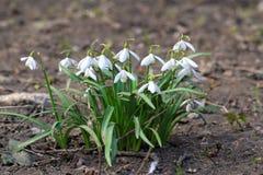 Vita blommor Royaltyfria Bilder