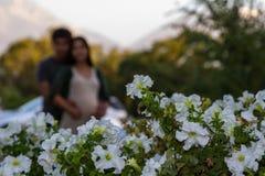 vita blommor Royaltyfri Bild
