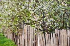 Vita blommor av friskhet som blomstrar träd. Skönhetnaturbackg Arkivfoton