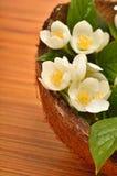 Vita blommor av jasmin i coconaten beskjuter på träbaksidan Royaltyfri Bild