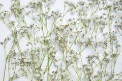 Vita blommor för blandning och gräsplansidor arkivfoton