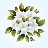 Vita blommor för din bakgrund Arkivbild
