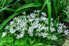 Vita blommor för vår i landet Fotografering för Bildbyråer