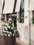 Vita blommor i den Venetian krukayttersidan shoppar, Italien Royaltyfri Fotografi