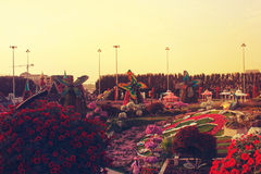 Vita blommor i Dubai mirakelträdgård Royaltyfri Fotografi