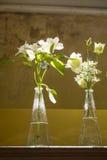 Vita blommor i en glass vase Royaltyfria Foton