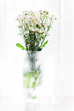 Vita blommor i en vas Royaltyfria Bilder