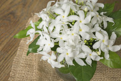 Vita blommor i glasflaska Arkivbilder
