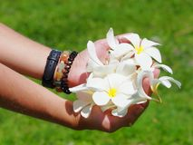 Vita blommor i händer som bildar en bunke arkivbilder