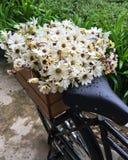 Vita blommor i korgen Arkivfoton