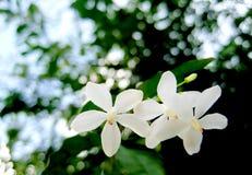 Vita blommor med bokehbakgrund Arkivbild