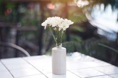 Vita blommor med den vita vasen royaltyfri foto