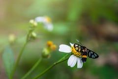 Vita blommor med fjärilar Arkivbilder