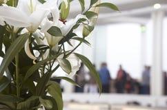 Vita blommor med folk ut ur fokus arkivfoton