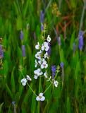 Vita blommor med grön bakgrund Arkivbild
