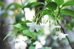 Vita blommor med grön naturbakgrund Arkivfoto