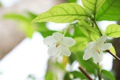 Vita blommor med grön naturbakgrund Arkivfoton
