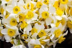 Vita blommor near sig Royaltyfri Foto