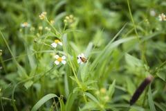 Vita blommor och bi Arkivbild