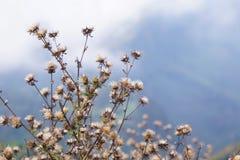 Vita blommor och himlen Royaltyfria Foton