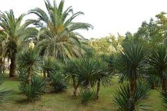Vita blommor och palmträd fotografering för bildbyråer