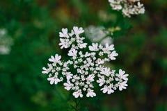 Vita blommor på bänk med sidor Arkivbild