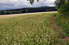 Vita blommor på backen vid skogen Arkivfoton