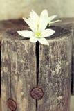 Vita blommor på en journal Arkivbild