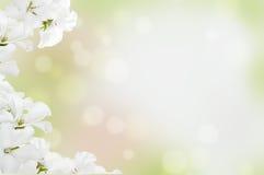Vita blommor på en ljus bakgrund Arkivbild