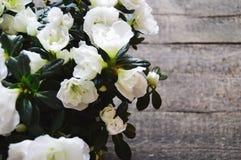 Vita blommor på en träbakgrund Arkivbild