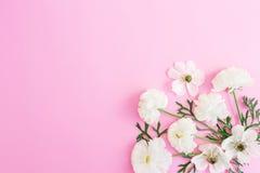 Vita blommor på rosa bakgrund yellow för modell för hjärta för blommor för fjärilsdroppe blom- Lekmanna- lägenhet, bästa sikt Arkivfoto