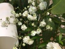 Vita blommor på våren Fotografering för Bildbyråer