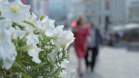 Vita blommor smyckar gatakafét Folket går gatorna av staden, inte i fokus lager videofilmer