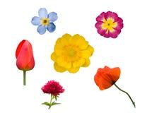 vita blommor som 1 ställs in Royaltyfria Bilder
