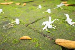 Vita blommor som faller på tegelstengolv Arkivbilder