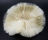 Vita Brain Coral Skeleton Royaltyfria Foton